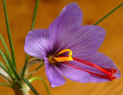 prodotti fiore zaff